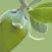 Jojoba_oil_logo.jpg