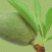 Sweet_almond_oil_logo.jpg