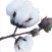 cotton_logo.jpg