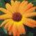 marigold_logo.jpg